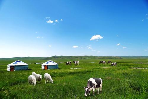 时尚蒙古图案电视背景墙草原风景蒙壁纸墙画蒙古八骏图