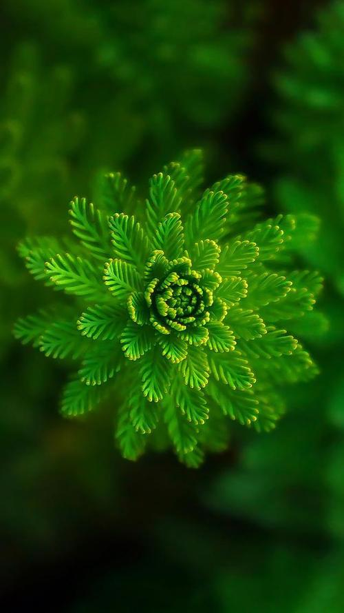 背景壁纸绿色绿叶树叶植物桌面6401138竖版竖屏手机