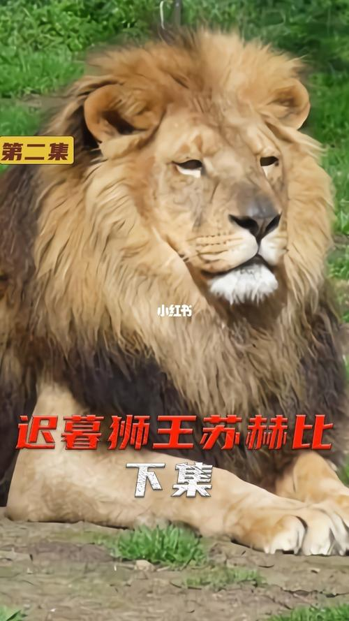 狮子动物世界鬣狗