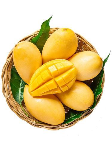 海南金煌芒10斤三亚水仙芒果园现摘现发新鲜树上熟应季孕妇水果5